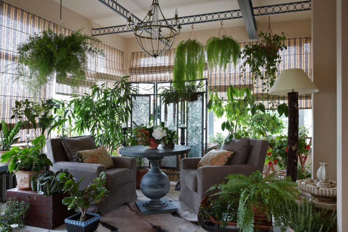 Фитодизайн интерьера – зимний сад