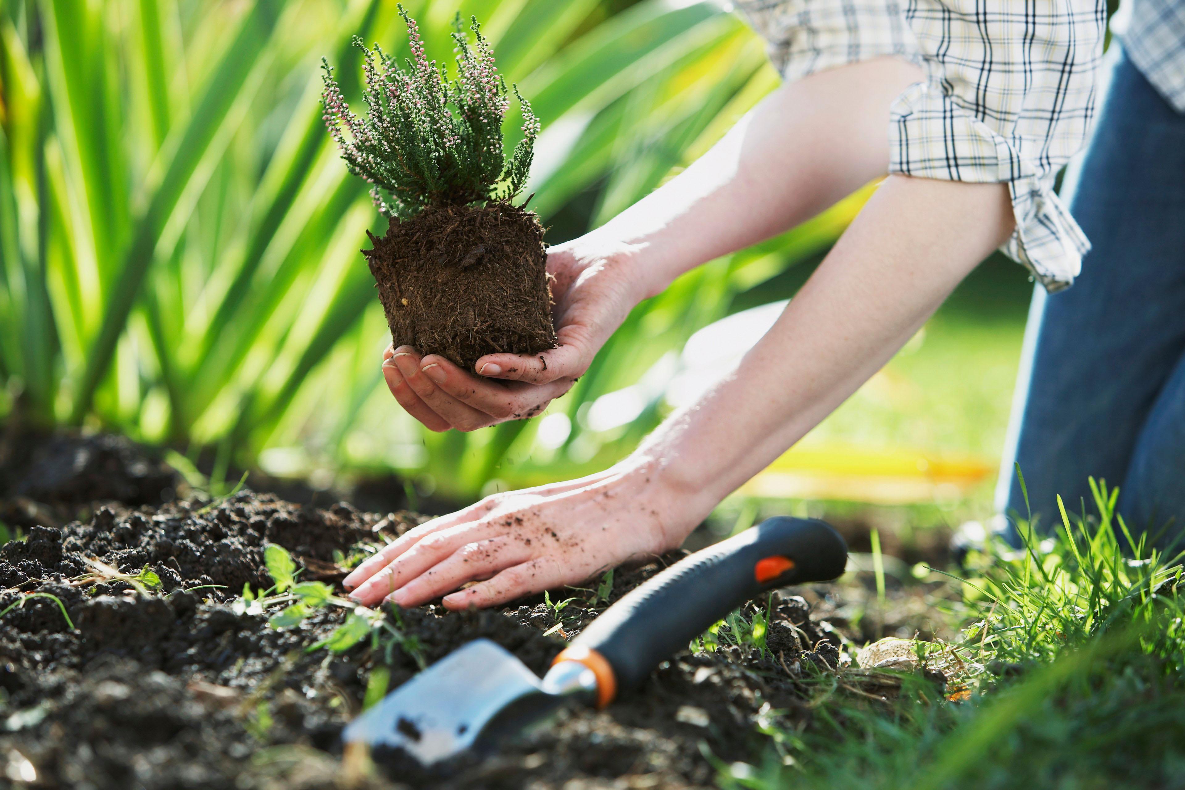 подработка по высадка растений водитель